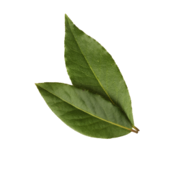 hoja laurel